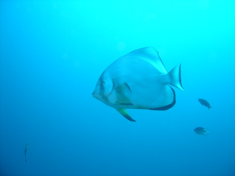 Dive safari in Djibouti